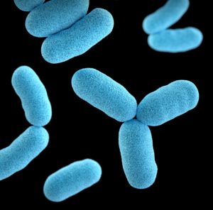 A close-up shot of bacterial particles