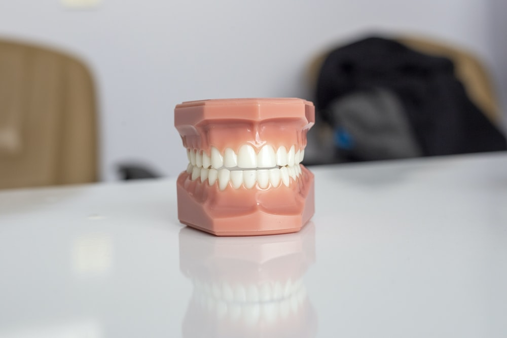 A fake teeth model